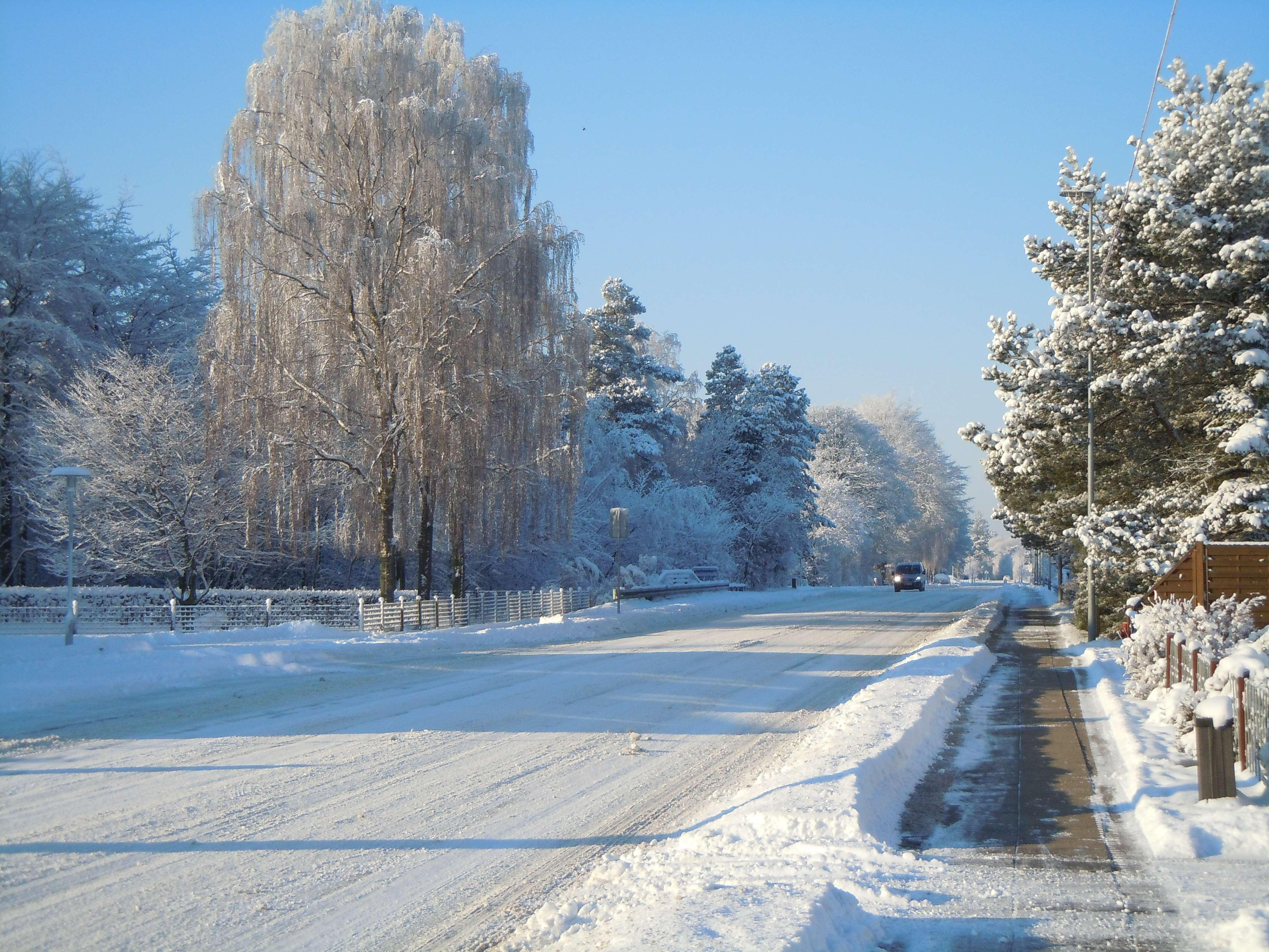 Filskov i vinterdress